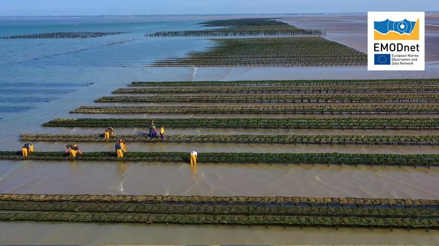 Aquaculture Farms