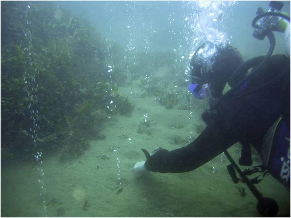 Fluid emissions on the seafloor of a volcanic structure, Ischia Island, Italy (photo courtesy Maria Luisa Putignano, CNR-IGAG)