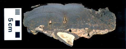 Ferro Manganese cobalt-rich crust from the Canary Islands (Spain). Photo: Instituto Geológico y Minero de España (IGME-CSIC). 2011.